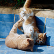 смешанные единоборства, коты