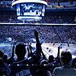 болельщики, драки, Доналд Брашир, НХЛ