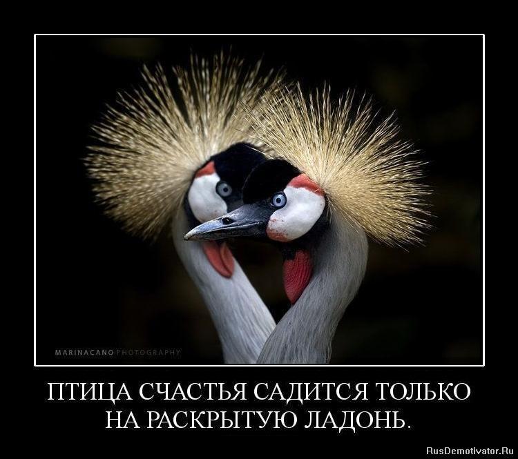 Птица счастья статусы