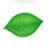 Вечнозеленый
