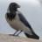 Crow's Stories