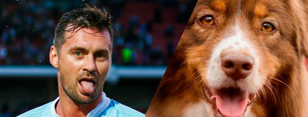 Если бы белорусский спорт был зоопарком, вот как бы это выглядело: Милевский – пес, Соболенко – лошадь и другие образы