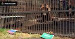Медведь из Минского зоопарка предсказывает, выиграет ли Россия у Саудовской Аравии
