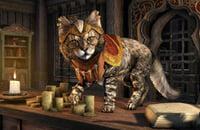 Bethesda Game Studios, Тодд Говард, Пасхалки, Bethesda Softworks, Skyrim, Ролевые игры