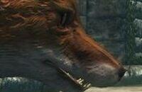 Skyrim, Bethesda Game Studios, Bethesda Softworks, Ролевые игры