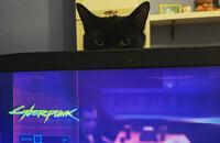 Ролевые игры, Cyberpunk 2077, Мемы, CD Projekt RED