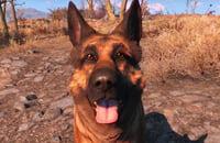 Животные в играх, Bethesda Game Studios, Fallout Shelter, Bethesda Softworks, Fallout 3, Fallout 4