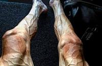 Bora-Hansgrohe, велошоссе, Тур де Франс, Павел Полянски