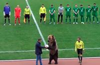 Медведь на игре в ПФЛ. Теперь вы видели все