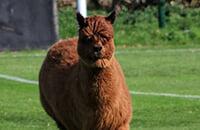 любительский футбол, Д7 Англия, животные и спорт, ахахаха