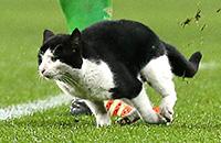 Эвертон, Кубок Англии, коты