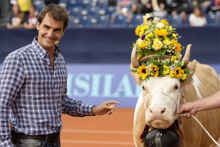 «Я научусь ее доить. Буду делать для нее все». А вы знали, что Федереру дарили корову – причем дважды?