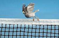 животные и спорт, фото, Hobart International, WTA