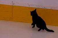 Котенок на льду перед матчем плей-офф НХЛ