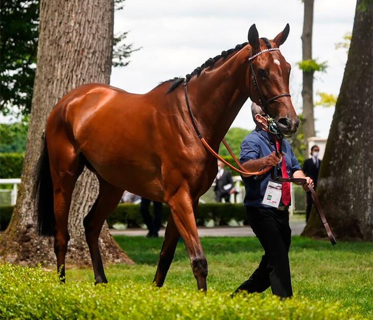 «Я без ума от коневодства». Гризманн открыл конюшню, покупает кобыл за 60 тысяч евро и назвал одну из них Принцессой (в честь дочки)