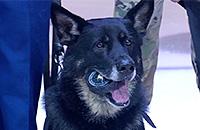 Собака-сапер произвела символическое вбрасывание в НХЛ