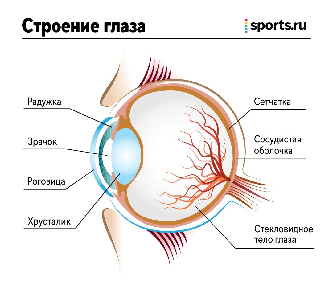Тычки в глаза очень опасны – можно лишиться зрения. Иногда глаза даже вываливаются из орбит! Поговорили с врачом о травмах глаз в спорте
