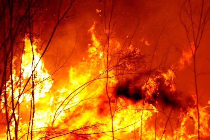 В Австралии жуткие лесные пожары: Джокович говорит о переносе Australian Open, воздух токсичен, животные гибнут миллионами