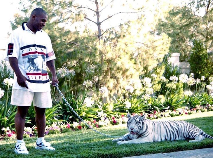 Золотая ванна, бенгальские тигры и куча машин. Тайсон был самым богатым спортсменом мира, но умудрился спустить почти 700 млн долларов