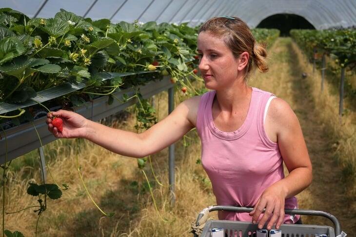 На «Уимблдоне» съедают по 30 тонн клубники – в 70-х ее даже перчили. В этом году ягоды подарили врачам и пустили на варенье
