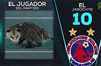 животные и спорт, высшая лига Мексика, Пуэбла, видео, Веракрус