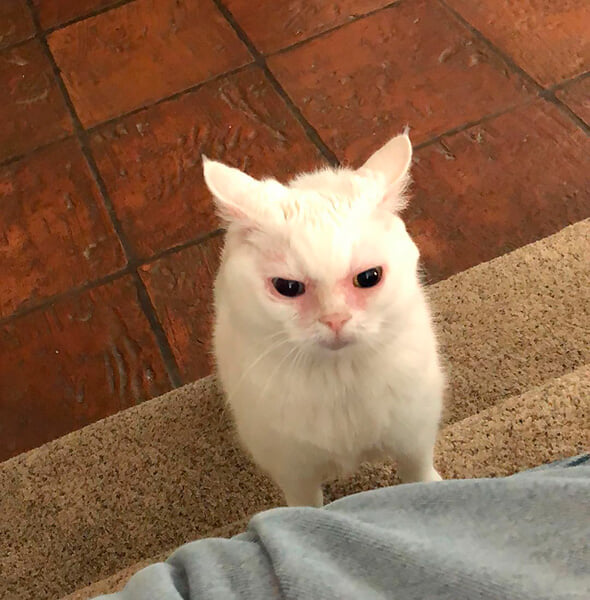 Рублев впервые вышел в финал «Мастерса», и интернет уверен, что эта кошка на него очень похожа. Согласны?