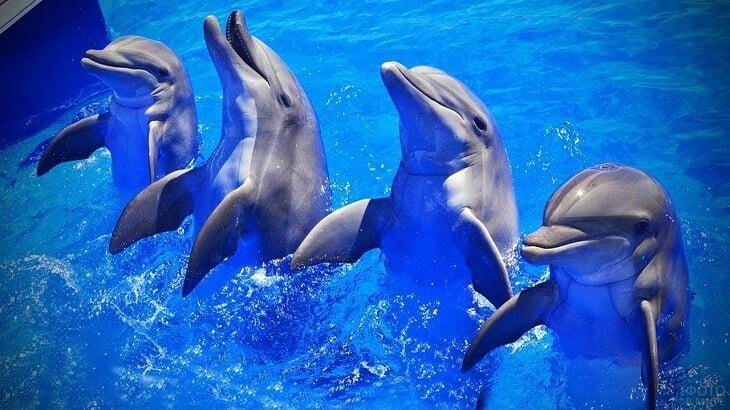 🐬 Рассказываем о триумфе Англии с помощью дельфинов: как они играют, ныряют и радуются выходу в финал