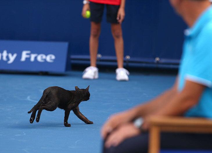 Теннисные струны из кошачьей кишки – миф. Кошек много где едят, но на ракетки пускают только коров и овец