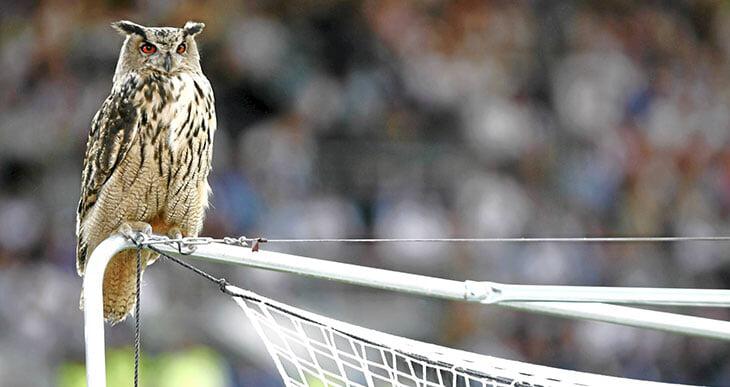 Сборную Финляндии называют «филинами». Все из-за того, что птица прервала матч с Бельгией (и чуть не утащила Еременко)