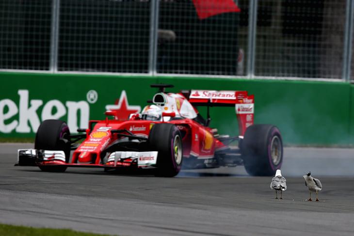 «Формула-1» каждый год казнит зверей в Канаде. Раньше страдали сурки, теперь сбили белку