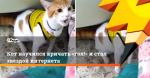 Кот научился кричать «гол!» и стал звездой интернета