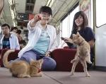 Японский ж/д оператор пригласил на борт 30 бродячих кошек и помог им найти хозяев!)