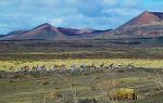 Vuelta a España 2016: Canarias negocia cuatro etapas finales de la Vuelta - Marca.com