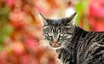 Как кот вину заглаживал