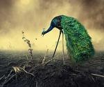 Другая реальность (19 фото) - Фрикции. Animals - Блоги - Sports.ru