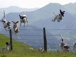 Собаки-летаки