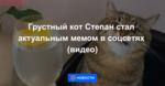 Грустный кот Степан стал актуальным мемом в соцсетях (видео)