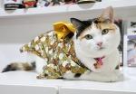 Видео с кошкой в гамаке за два дня набрало 9,7 миллиона просмотров