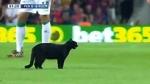 Barcellona-Elche, interrotta per invasione di un gatto nero