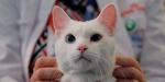 Эрмитажный кот Ахилл возглавил которейтинг