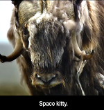 Космический Котик, Космический Котик