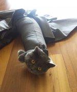 Номинанты на звание самого бестолкового кота года))