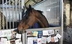 Лошадке желают выздоровления (фото) - Круто.Ново - Блоги - Sports.ru