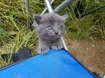 Бездомный котёнок подбежал к человеку, пока тот рыбачил, и настойчиво потребовал внимания