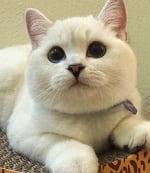 Тяжелобольной кот загрустил, а новый питомец помог ему не сдаться!