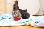 Трогательная встреча двух осиротевших котят