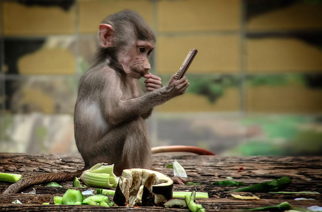 Обезьяна и обезьянка картинки