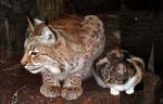 Кошка забрела в зоопарк и нашла себе друга