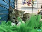 В Уфу съехались кошки со всей России