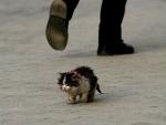 Он шёл по улице и тихо плакал..
